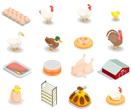 Poultry production isometric set of brood hen bird feeder canned goods eggs gastronomic products isolated vector illustration