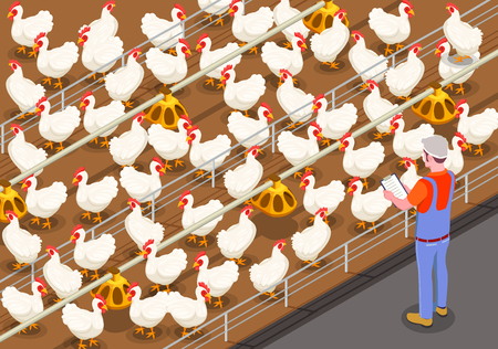 Poultry isometric background with staff member on chicken farm controlling feeding of birds vector illustration Banque d'images - 111188049