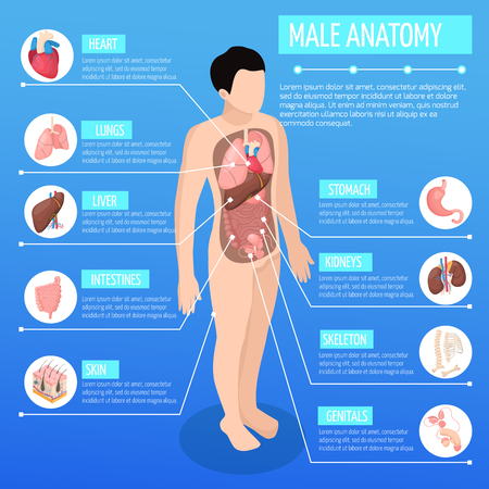Male anatomy isometric poster with infographic model of human body and description of internal organs vector illustration Stock Vector - 111268068