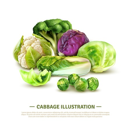 Realistic composition with white cabbage and scotch kale heads chinese leaves brussels sprouts broccoli and cauliflower vector illustration Stock Vector - 111823922