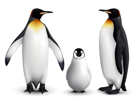 Famiglia del pinguino reale con l'immagine realistica del primo piano del pulcino con l'illustrazione di vettore di vista frontale e laterale degli uccelli adulti Vettoriali