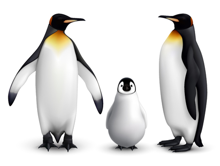 King penguin family with chick realistic closeup image with adult birds front and side view vector illustration Illustration