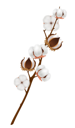 Colored and realistic cotton flower branch composition with ripened harvest on brown branch vector illustration