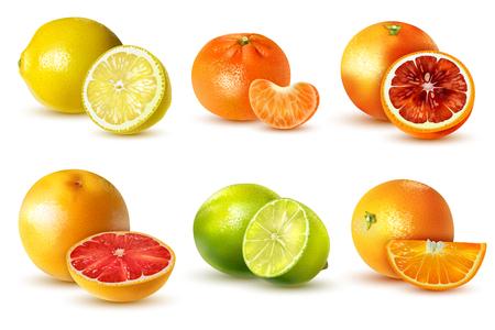 Frutas cítricas realistas con limón, lima, naranja, pomelo, mandarina, aislado en la ilustración de vector de fondo blanco