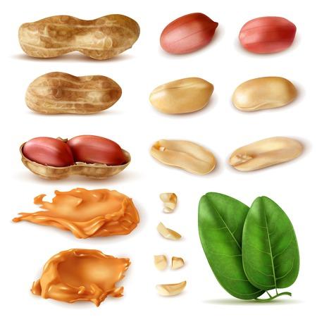 Set realistico di arachidi di immagini isolate di fagioli in guscio con foglie verdi e illustrazione vettoriale di burro di arachidi Vettoriali