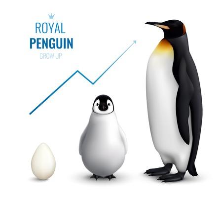 Manifesto realistico del ciclo di vita dei pinguini reali con l'adulto del pulcino dell'uovo e che indica la crescita sull'illustrazione di vettore della freccia