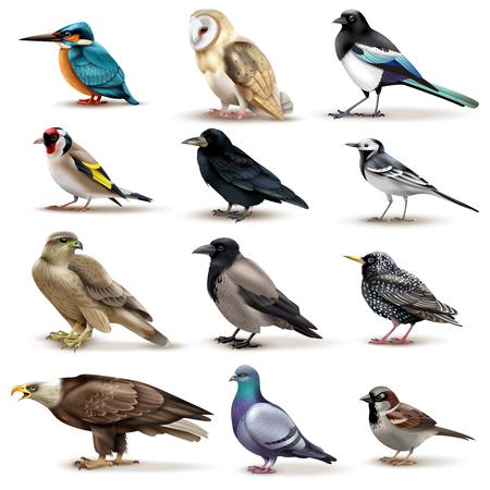 Vogelsreeks van twaalf geïsoleerde beelden van kleurrijke vogels met verschillende soorten op lege vectorillustratie als achtergrond