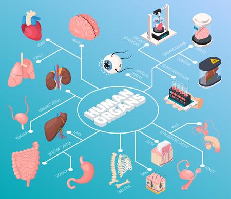 Das isometrische Flussdiagramm der menschlichen Organe zeigte männliche und weibliche innere Organe sowie Bluttransfusionsspenden und 3D-Druckvektorillustrationen