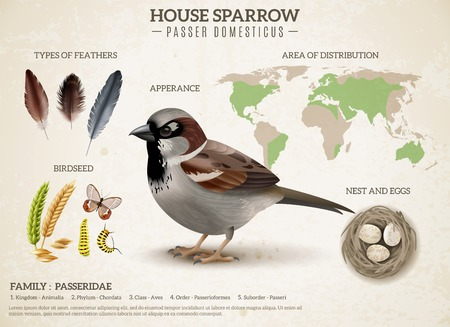 Birds scheme composition with realistic image of sparrow and images of feathers seeds and world map vector illustration
