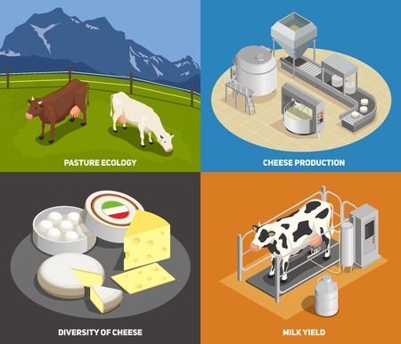 Cheese production 2x2 design concept set of pasture milk yield manufacturing diversity of cheese square icons isometric vector illustration Illustration