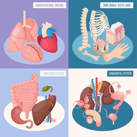 Organes humains 2x2 concept de conception ensemble de systèmes digestifs et urogénitaux peau os dents cheveux illustration vectorielle isométrique
