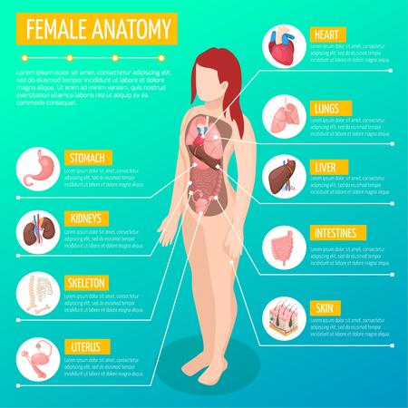 Frauenanatomie-Infografik-Layout mit Lage und Definitionen der inneren Organe in der isometrischen Vektorillustration des weiblichen Körpers
