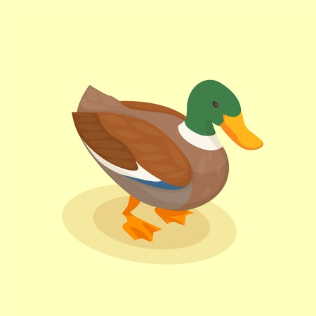 Poultry vector illustration with colored duck isometric icon in cartoon style on yellow background Çizim