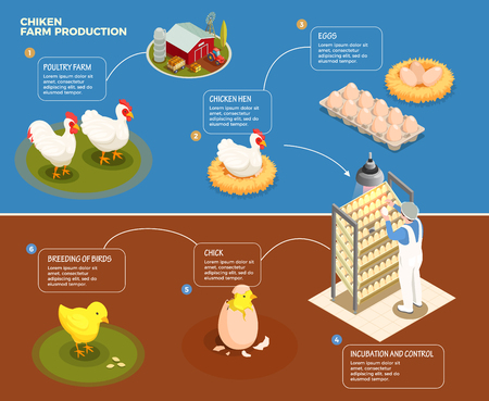 Chicken production step by step scheme from poultry farm to incubation control and breeding of chick isometric vector illustration Standard-Bild - 113030699