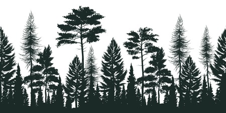 Silhouette of pine forest with small and tall evergreen trees on white background vector illustration
