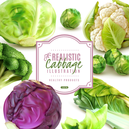 Realistic frame with different kinds of fresh cabbage on white background vector illustration 일러스트