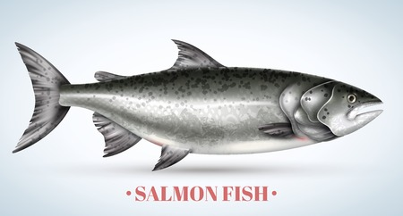 Realistic salmon fish on light background vector illustration Banco de Imagens - 113305450