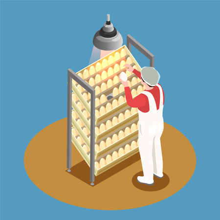 Chicken farm isometric design concept with incubator rack and employee looking through chicken eggs vector illustration Illustration