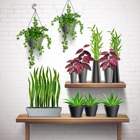 Zimmerpflanzen realistische weiße Backsteinmauer mit hängenden Efeu-Töpfen Sukkulenten auf Beistelltisch-Vektor-Illustration Vektorgrafik