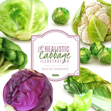 Realistic frame with different kinds of fresh cabbage on white background vector illustration Ilustração