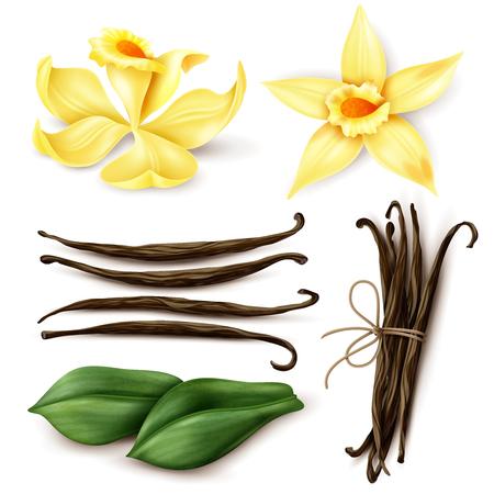 Vanillepflanze realistischer Satz mit frischen gelben Blumen aromatische getrocknete braune Bohnen und Blätter lokalisierte Vektorillustration