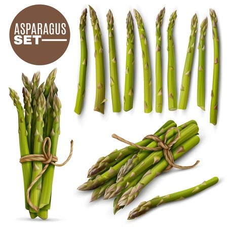 Fresh green tender asparagus shoots spears realistic set with 2 tied bunches and scattered stalks vector illustration
