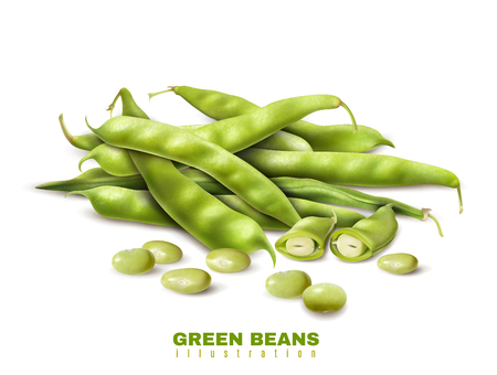 Fresh green organic beans cut and whole pods close up realistic image healthy food advertisement vector illustration    일러스트