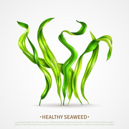Spirulina healthy super food seaweed rich in protein antioxidants algae realistic advertising poster white background vector illustration