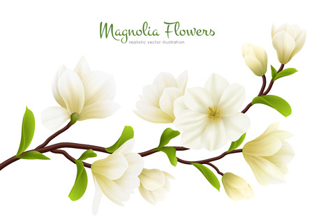 Colored realistic white magnolia flower composition with green calligraphy description vector illustration Ilustrace