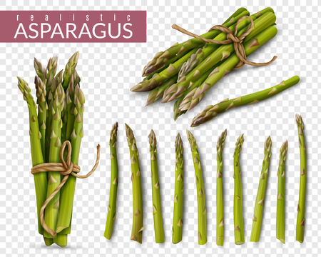 Fresh green asparagus spears realistic set with tied bunches and scattered stalks against transparent background vector illustration