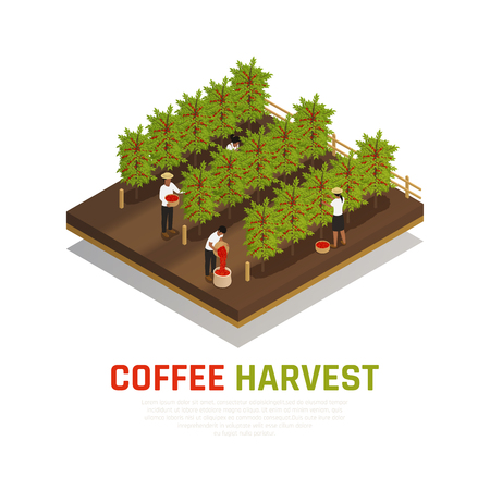 Coffee industry production isometric composition with coffee trees on fazenda with people collecting beans and text vector illustration
