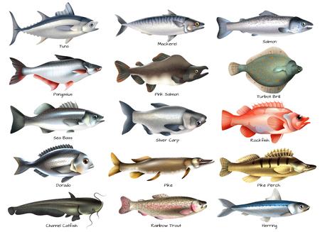 Set van pictogrammen met zee- en riviervissen met inscripties op witte achtergrond geïsoleerde vectorillustratie