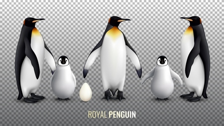 Royal penguin realistic set with with egg chick and  adult birds on transparent background vector illustration