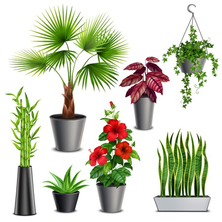 House plants realistic set with hibiscus succulents ivy hanging pots fan palm bamboo stalks vase vector illustration