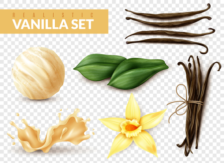 Vanilla realistic set with ice cream scoop shake splash flower dried beans leaves transparent background vector illustration