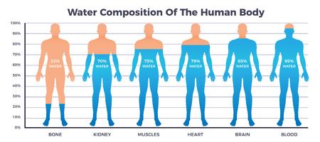 Körper- und Wasserkarte mit Wasserzusammensetzung der flachen Vektorillustration der Symbole des menschlichen Körpers