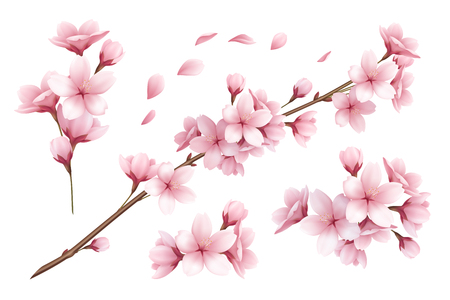 Realistic set of beautiful sakura branches flowers and petals isolated on white background vector illustration