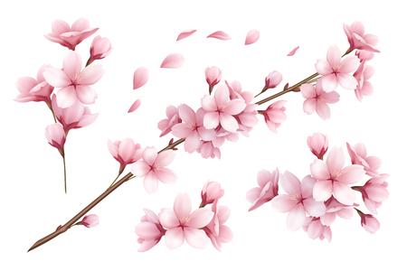Realistischer Satz schöne Kirschblüte-Zweigblumen und -blumenblätter lokalisiert auf weißer Hintergrundvektorillustration