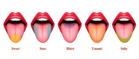 Il gusto della lingua aree realistiche illustrazione vettoriale con cinque sezioni di base del gusto esattamente dolce salato acido amaro e umami Vettoriali