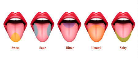 Ilustración de vector realista de áreas de sabor de lengua con cinco secciones básicas de gusto exactamente dulce salado amargo amargo y umami Ilustración de vector