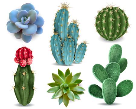 Elementi popolari di piante da interno e varietà di rosette di piante grasse tra cui raccolta realistica di cactus con puntaspilli raccolta vettoriale isolata Vettoriali