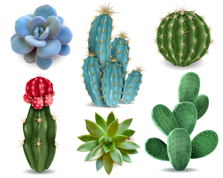 Elementos populares de plantas de interior y variedades de rosetas suculentas, incluida la colección realista de cactus de cojín de alfiler colección de vectores aislados Ilustración de vector