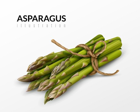 Fresh green asparagus bunch tied with brown string farm market healthy food realistic closeup image vector illustration