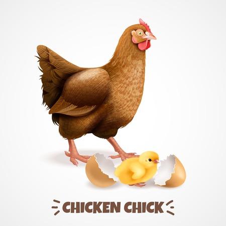Mère poule avec poussin nouvellement éclos avec coquille d'oeuf agrandi réaliste poulet cycle de vie élément affiche illustration vectorielle