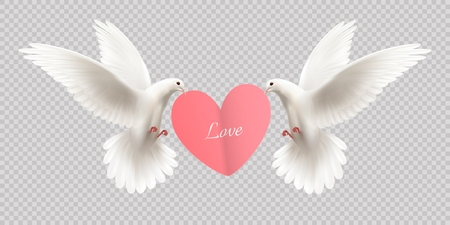 Love design concept with two white pigeons holding heart in its beak on transparent background realistic vector illustration