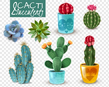 Blooming cacti and popular succulents varieties easy care decorative indoor plants realistic set transparent background vector illustration Çizim