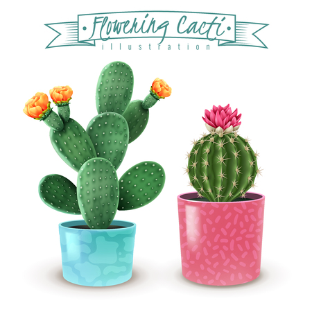 Blooming cacti realistic set of 2 popular houseplants varieties in colorful decorative pots closeup image vector illustration