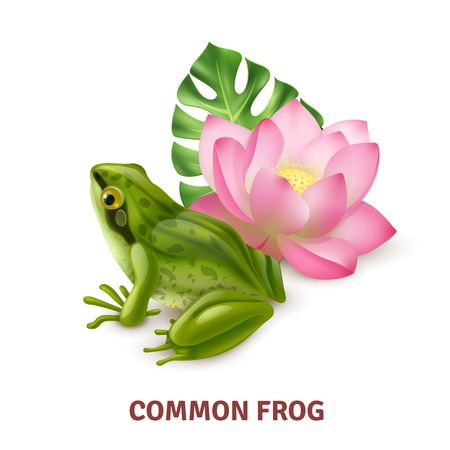 Adult common frog semi aquatic amphibia realistic closeup side view image with water lily background vector illustration Stock Illustratie