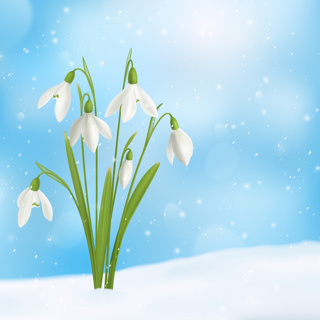 Realistic snowdrop flower snow composition with bunch of flowers grown through snow surface with snowflakes sky vector illustration Vector Illustratie