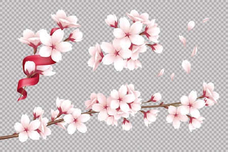 Transparent background with realistic blooming cherry flowers and petals vector illustration